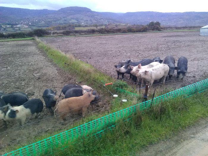 La Ferme des Cochons Nomades - Julien Constans